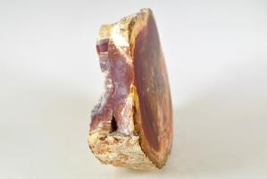 Fossilised Wood Branch 19cm | Image 5