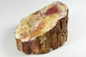 Fossilised Wood Branch bevel cut 9.1cm | Image 4