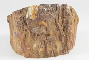 Fossilised Wood Branch bevel cut 9.1cm | Image 5