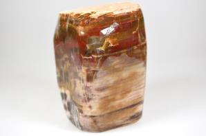 Fossil Wood Freeform 740grams | Image 2