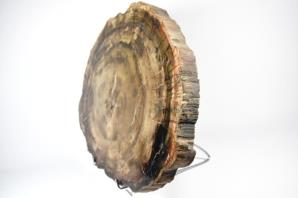 Fossilised Wood Slice Large 52.5cm | Image 5